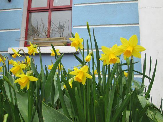 2014-03-22-daffodils.jpg
