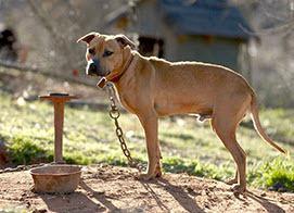 2014-03-27-dogfight.jpg