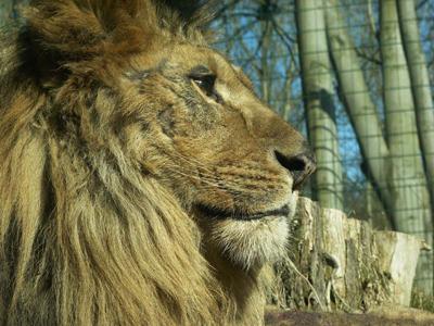 2014-03-27-lionzoo.jpg