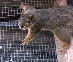 2014-03-28-healthySuperSquirrel.JPG