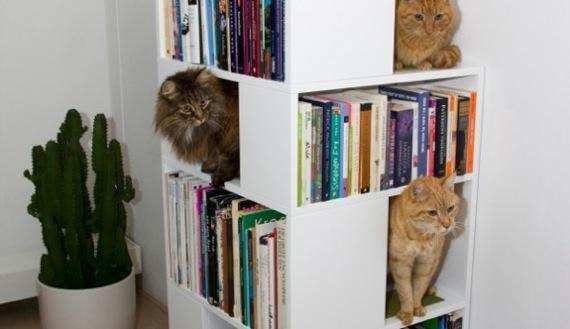 catbookshelf01
