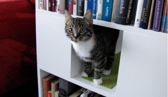 catbookshelf02