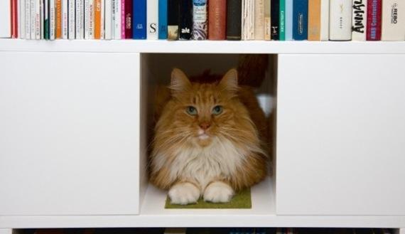 catbookshelf03