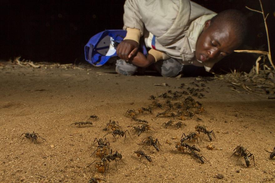 The ants wilson