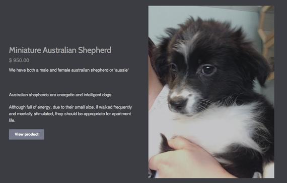 2014-03-31-SafariPuppies.png