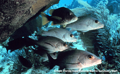 2014-04-02-FL_coral_fish_sm.jpg