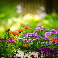 2014-04-05-springflowers.jpg