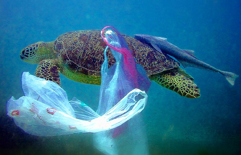 Image result for ocean plastic