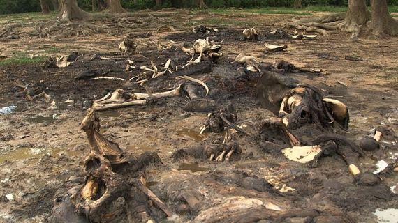 2014-04-09-DzangaBaiMay8Slaughter.jpg