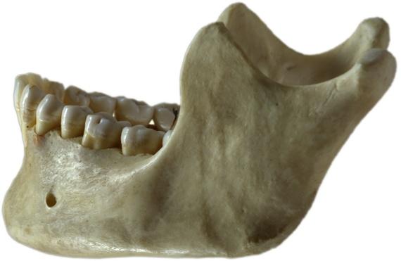 2014-04-09-Jawbone.jpg