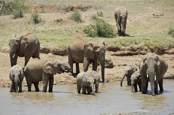 2014-04-09-JulieLarsenMaher_5708_AfricanElephantsKenya_030824.jpg