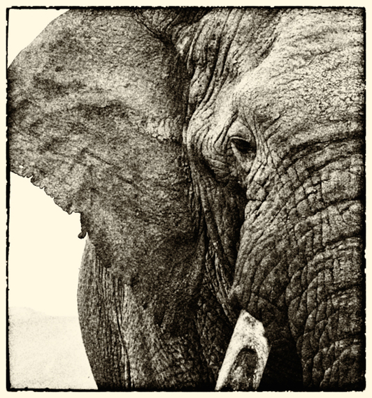 2014-04-09-Kelting_Emily_03_OldElephant.jpg