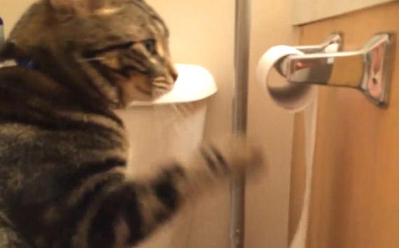 toiletpapervscat01