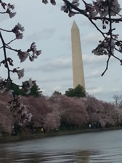 2014-04-10-dccherryblossoms.jpg