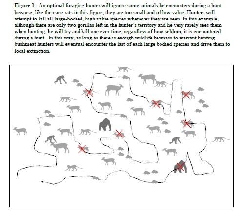2014-04-11-Davidsbushmeatdiagram.jpg