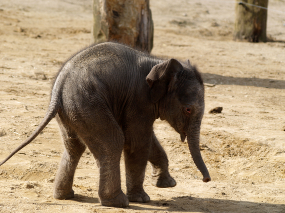 2014-04-15-Twycrosselephant.jpg