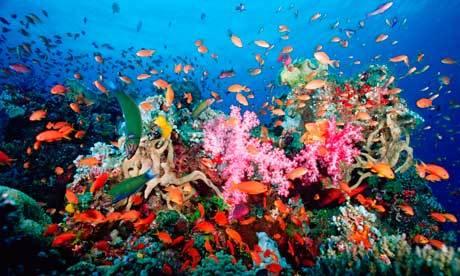 2014-04-16-CoralReefEarthDrReeseHalter