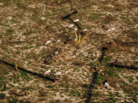 2014-04-17-cattlegraze_108_600x450.jpg