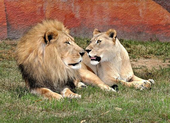 2014-04-18-lions.jpg