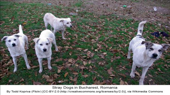2014-04-21-straydogsinbucharest.huffpost.png