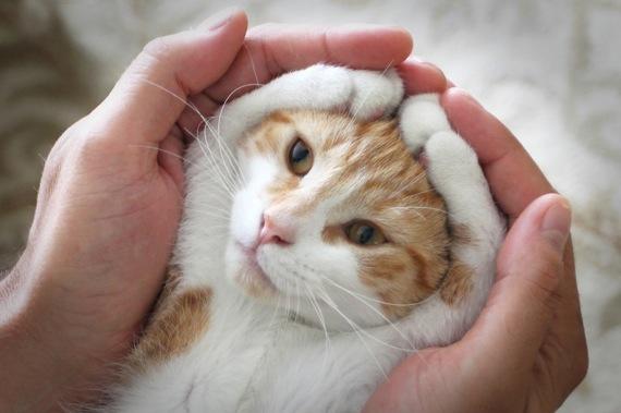 catpose01