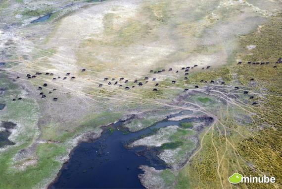 2014-04-24-OkavangoDeltaAliciaOrtego.jpg
