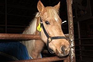 2014-04-25-horse2.jpg