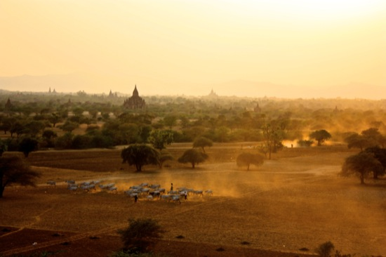 Temples of Bagan Burma at sunset