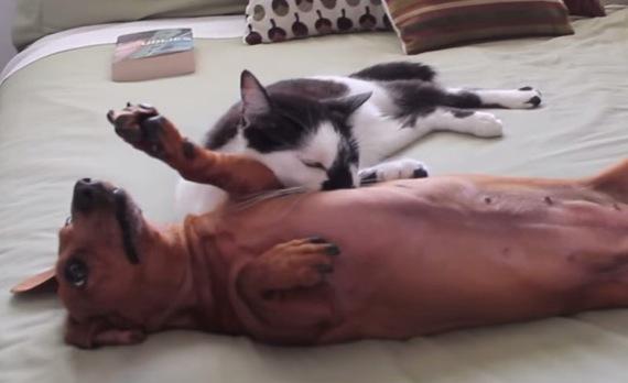 catvsdog01