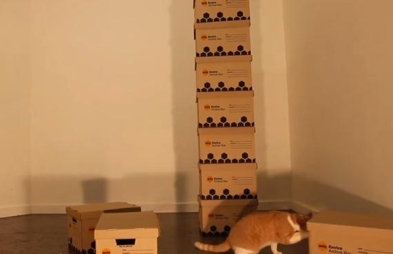 catboxhouse03