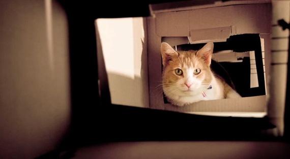 catboxhouse04