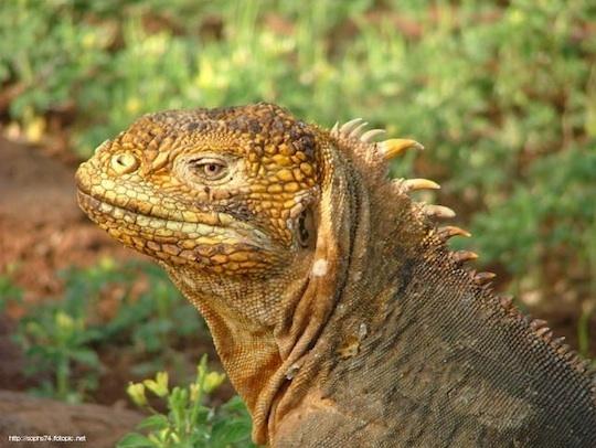2014-04-28-3.Iguana.jpg