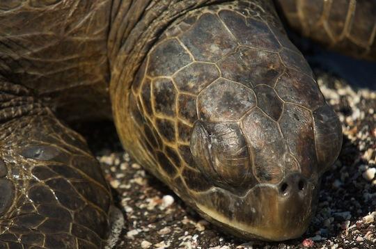 2014-04-28-8.Galapagosturtle.jpg