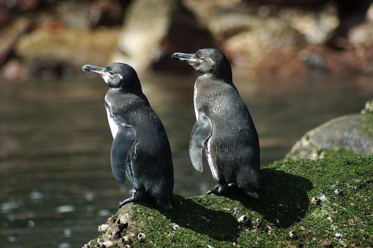 2014-04-28-9.penguins.jpg