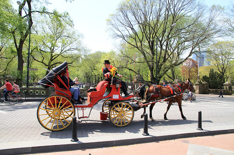 here 39 s what 39 s missing in the debate over central park 39 s horses and carriages huffpost. Black Bedroom Furniture Sets. Home Design Ideas