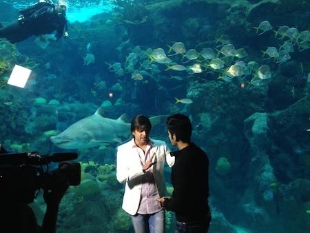 2014-04-29-Bollywoodaquarium.JPG
