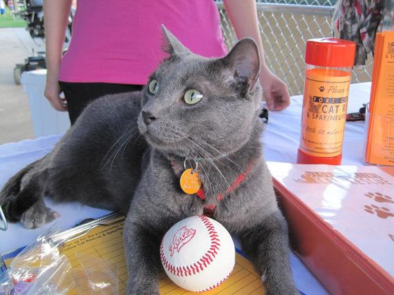 2014-04-30-Jakethebaseballcat_EDIT.jpg