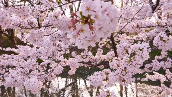 2014-05-01-Hirosaki4640x360.jpg