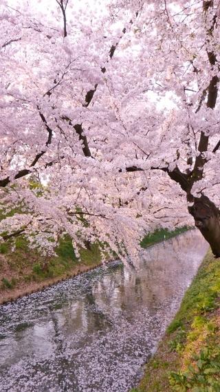 2014-05-01-Hirosaki7360x640.jpg