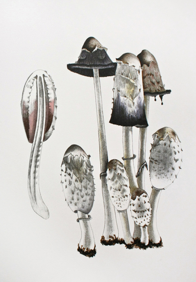 2014-05-01-MushroomBook_PlateVIII_Long.jpg