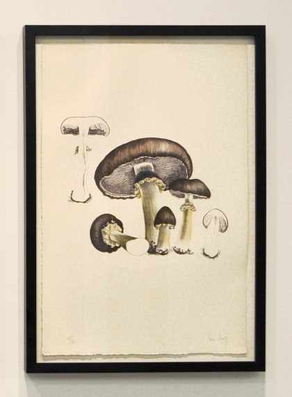 2014-05-01-cage_mushroombook_plate5long.jpg