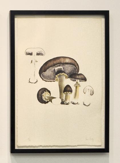 2014-05-01-cage_mushroombook_plate5long.jpg
