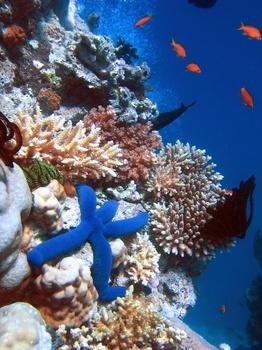 2014-05-01-coral1.jpg