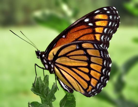 2014-05-04-butterfly.jpg