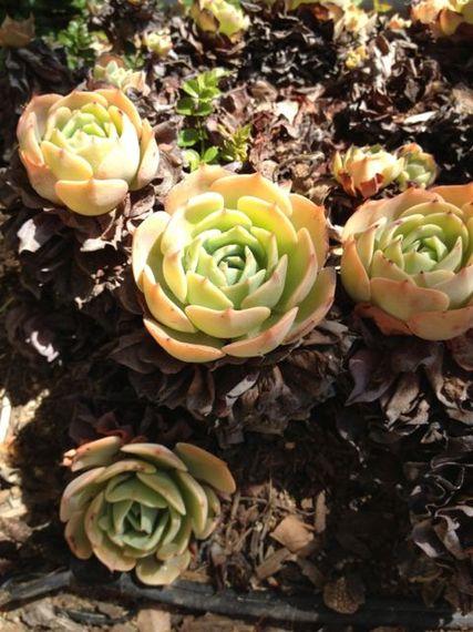 2014-05-06-cactus.jpg