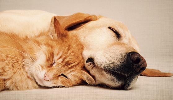 2014-05-06-catanddog.jpg