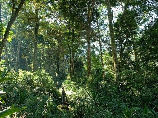 2014-05-06-cn_image.size.rainforestmozambique.jpg