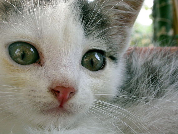 2014-05-08-800pxYoung_cats.jpg