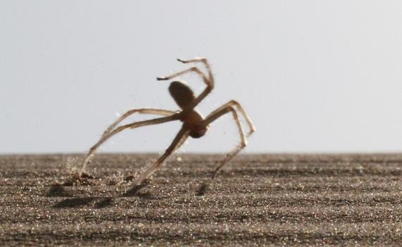 2014-05-08-spiderflip.jpg