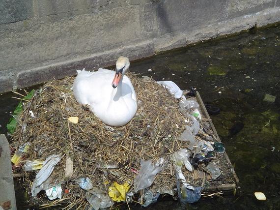 2014-05-11-Pollution_swan.jpg